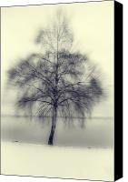 Snowy Night Canvas Prints - Winter Tree Canvas Print by Joana Kruse