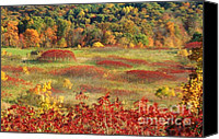Indiana Autumn Canvas Prints - Autumn Foliage Canvas Print by Jack R Brock