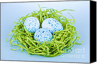 Decorated Canvas Prints - Blue Easter eggs  Canvas Print by Elena Elisseeva