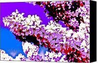 Trees Blossom Canvas Prints - Cherry blossom art Canvas Print by David Pyatt