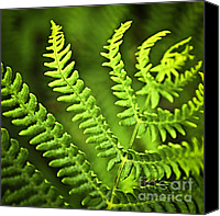Forest Canvas Prints - Fern leaf Canvas Print by Elena Elisseeva