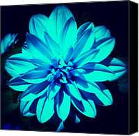 Instagram Canvas Prints - Flower Canvas Print by Katie Williams