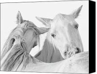 White Horses Canvas Prints - Pals Canvas Print by Ron  McGinnis