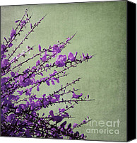 Fine Art Photo Canvas Prints - Purple Canvas Print by Kristin Kreet