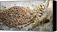 Vegetarian Canvas Prints - Wheat ears and grain Canvas Print by Elena Elisseeva