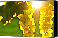 Vines Canvas Prints - Yellow grapes Canvas Print by Elena Elisseeva