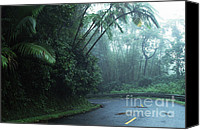 Puerto Rico Photo Canvas Prints - Misty Rainforest El Yunque Canvas Print by Thomas R Fletcher