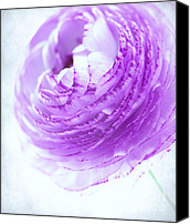 Garden Flowers Canvas Prints - Purple Canvas Print by Kristin Kreet