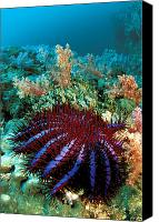 Dave Canvas Prints - Thailand, Marine Life Canvas Print by Dave Fleetham - Printscapes
