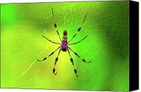 Spider Canvas Prints - 42- Come Closer Canvas Print by Joseph Keane