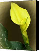 Calla Lily Mixed Media Canvas Prints - Calla Lily Mix And Match Canvas Print by Debra     Vatalaro