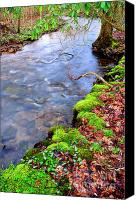 Rushing Mountain Stream Canvas Prints - Middle Fork of Williams River Canvas Print by Thomas R Fletcher