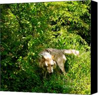 Wolf Photo Shot Canvas Prints - The Wild Wolve Group B Canvas Print by Debra     Vatalaro