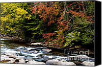 Williams Canvas Prints - Williams River Autumn Canvas Print by Thomas R Fletcher
