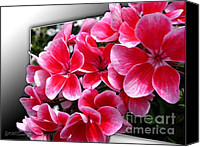 Jem Fine Arts Mixed Media Canvas Prints - Zonal Geranium named Candy Fantasy Kiss Canvas Print by J McCombie