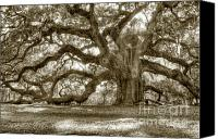 Tree Photo Canvas Prints - Angel Oak Live Oak Tree Canvas Print by Dustin K Ryan