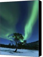 Polar Aurora Canvas Prints - Aurora Borealis, Forramarka, Troms Canvas Print by Arild Heitmann