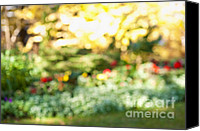 Flower Blooming Canvas Prints - Flower garden in sunshine Canvas Print by Elena Elisseeva
