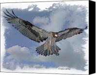 Osprey Canvas Prints - Osprey Flight Canvas Print by Larry Linton