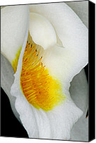 Delicate Canvas Prints - Exotic Orchids of C Ribet Canvas Print by C Ribet