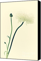 Fine Art Photo Canvas Prints - Flower Canvas Print by Kristin Kreet