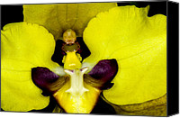 Bloom Canvas Prints - Exotic Orchids of C Ribet Canvas Print by C Ribet