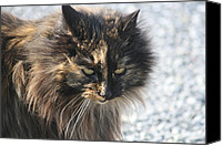Long Pyrography Canvas Prints - Cat Portrait Canvas Print by Valia Bradshaw