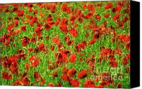 Heads Digital Art Canvas Prints - Field of poppies. Canvas Print by Bernard Jaubert