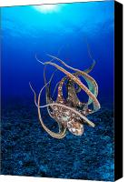 Dave Canvas Prints - Hawaii, Day Octopus Canvas Print by Dave Fleetham - Printscapes
