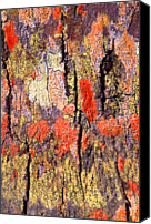 Textured Canvas Prints - Tree Bark Canvas Print by John Foxx