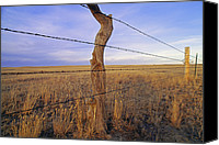 Barbed Wire Fences Photo Canvas Prints - A Barbed Wire Fence Stretches Canvas Print by Gordon Wiltsie