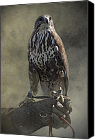 Eagle Watching Canvas Prints - A Bird In The Hand Canvas Print by Ethiriel  Photography