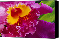 Cattleya Canvas Prints - A Close View Of A Bright Pink Cattleya Canvas Print by Jonathan Blair