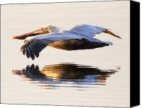 Pelican Canvas Prints - A Closer Look Canvas Print by Janet Fikar