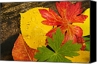 Urban Scenes Canvas Prints - A Closeup Of Autumn Leaves Canvas Print by Ralph Lee Hopkins