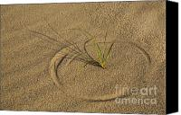 Race Point Canvas Prints - A Compass in the Sand Canvas Print by Susan Candelario