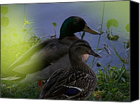 Kerry Mcphee Canvas Prints - A Couple of Ducks Canvas Print by Kerry McPhee
