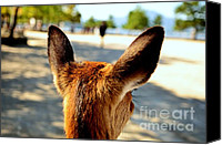 Miyajima Canvas Prints - A Deers Point of View Canvas Print by Dean Harte