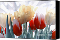 Tulips Canvas Prints - A different way Canvas Print by Kristin Kreet
