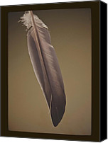 Vintage Photography Canvas Prints - A Feather Is Not A Bird Canvas Print by Odd Jeppesen