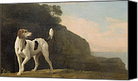 Foxhound Canvas Prints - A Foxhound Canvas Print by George Stubbs