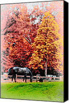 Chestnut Hill Canvas Prints - A Girl and her Horse Canvas Print by Bill Cannon