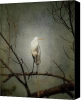 Great Egret Canvas Prints - A Great Egret Canvas Print by Al  Mueller