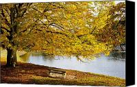 Park Benches Canvas Prints - A Large Tree And Bench Along The Water Canvas Print by John Short