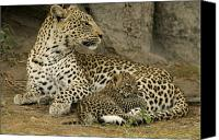 Leopards Canvas Prints - A Leopard Cub With Her Mother Canvas Print by Beverly Joubert