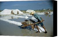 Puerto Rico Canvas Prints - A Man Pushes A Wheelbarrow Of Salt Canvas Print by Justin Locke