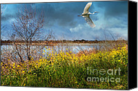Snowy Egrets Canvas Prints - A Moment In Time In The Journey of The Great White Egret . 7D12643 Canvas Print by Wingsdomain Art and Photography