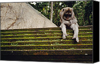 Religious Structures Canvas Prints - A Monkey Sits Contemplatively Canvas Print by Justin Guariglia