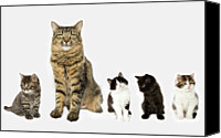 Domestic Animals Photography Canvas Prints - A Mother With Four Kittens All Sitting In A Row. Canvas Print by Nicola Tree