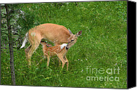Mother Canvas Prints - A Mothers Love - Doe and Fawn Canvas Print by Christine Till